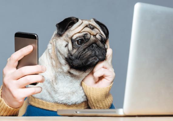 Pes-pracující-na-notebooku-1536x864